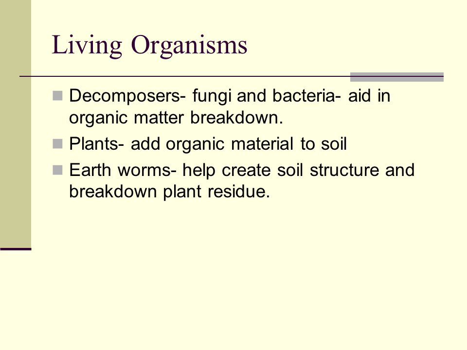 Living Organisms Decomposers- fungi and bacteria- aid in organic matter breakdown. Plants- add organic material to soil.