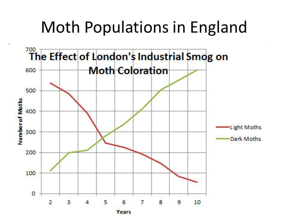 Moth Populations in England