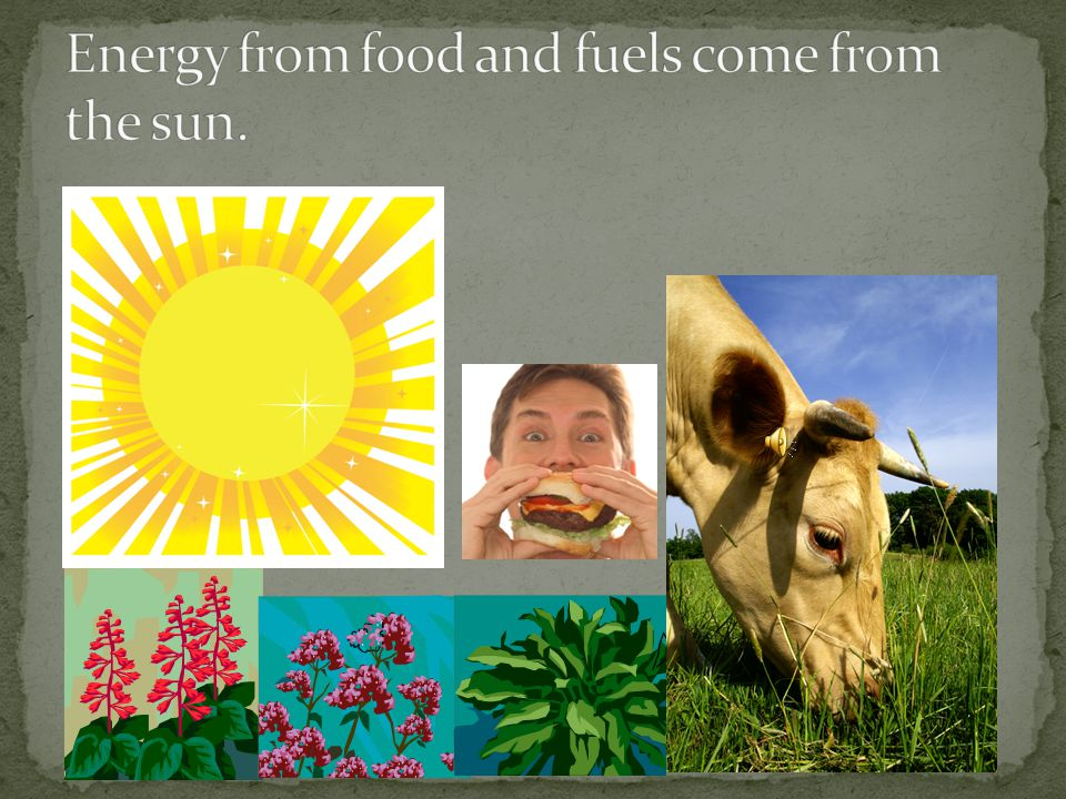 Energy from food and fuels come from the sun.
