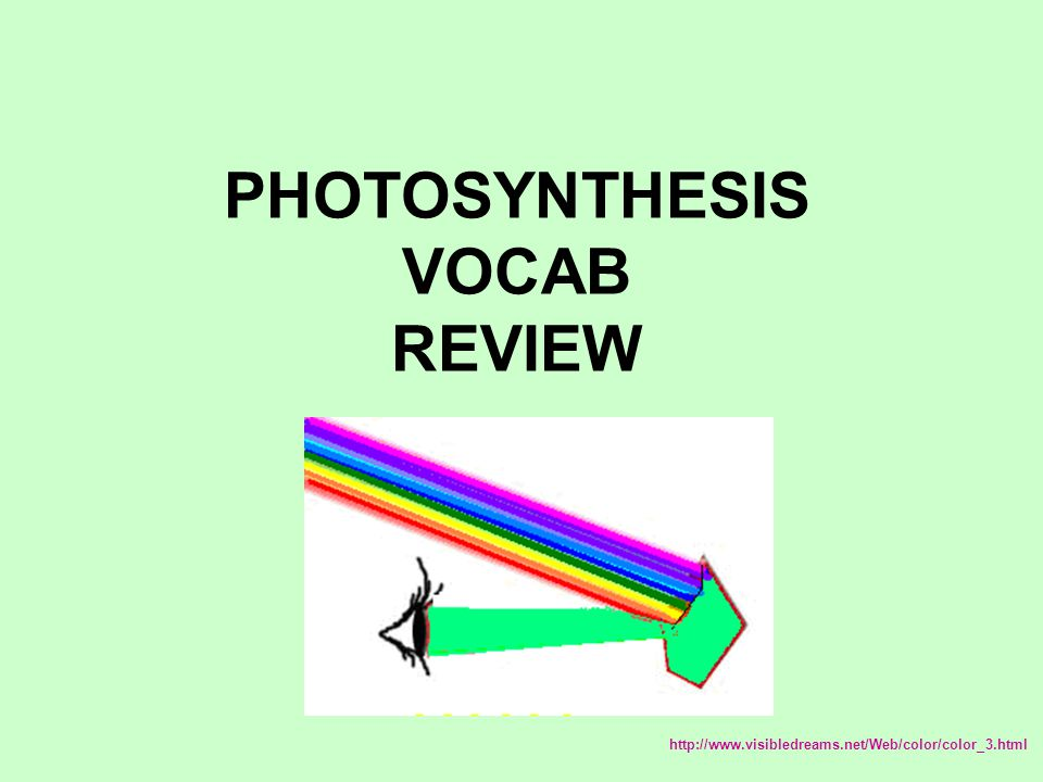 PHOTOSYNTHESIS VOCAB REVIEW