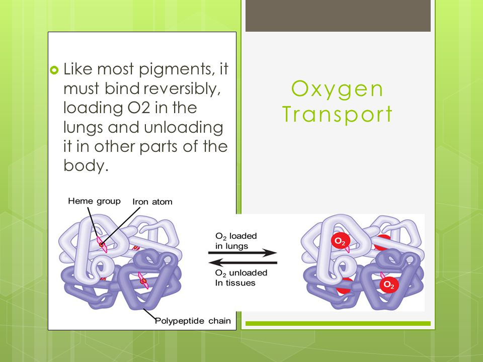 Oxygen Transport Like most pigments, it must bind reversibly, loading O2 in the lungs and unloading it in other parts of the body.