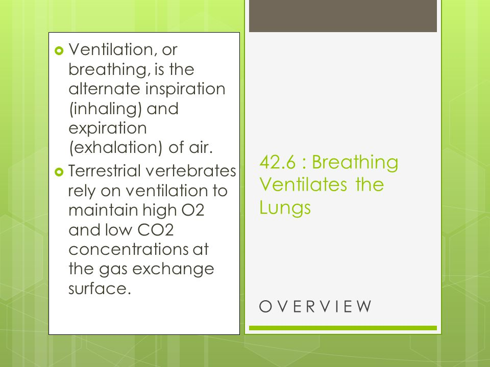 42.6 : Breathing Ventilates the Lungs