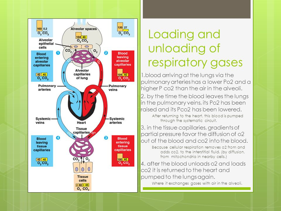 Loading and unloading of respiratory gases