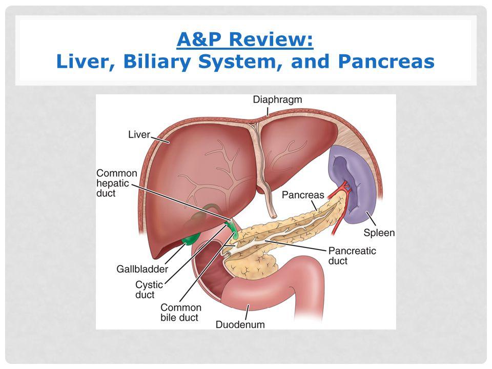 Gallbladder Disease Candice W Laney Spring Ppt Video Online Download