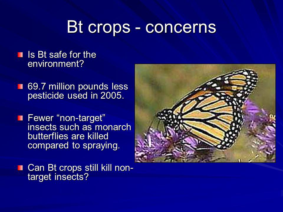 Bt crops - concerns Is Bt safe for the environment