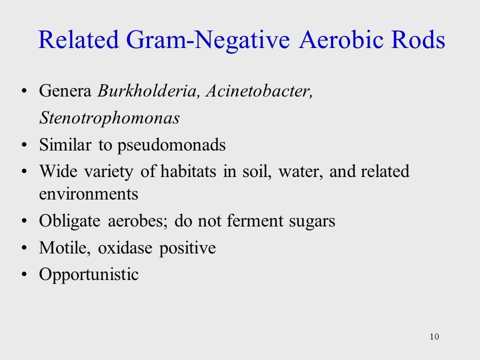 Related Gram-Negative Aerobic Rods