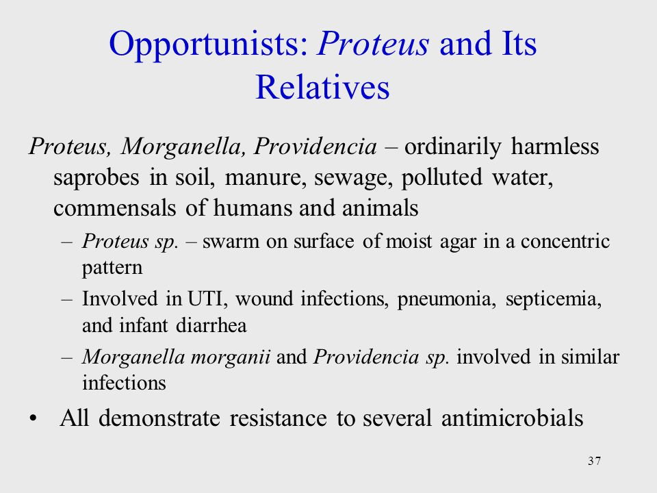 Opportunists: Proteus and Its Relatives
