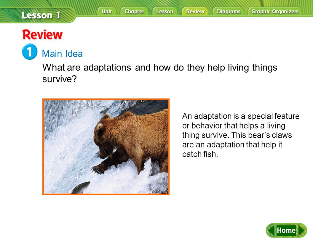 What are adaptations and how do they help living things survive
