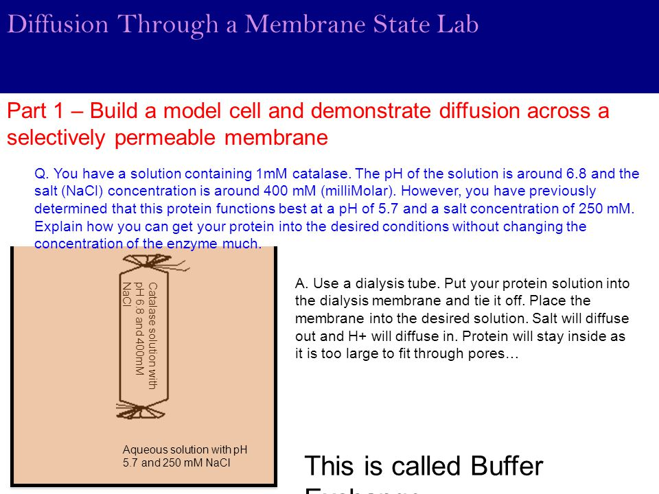Diffusion Through a Membrane State Lab