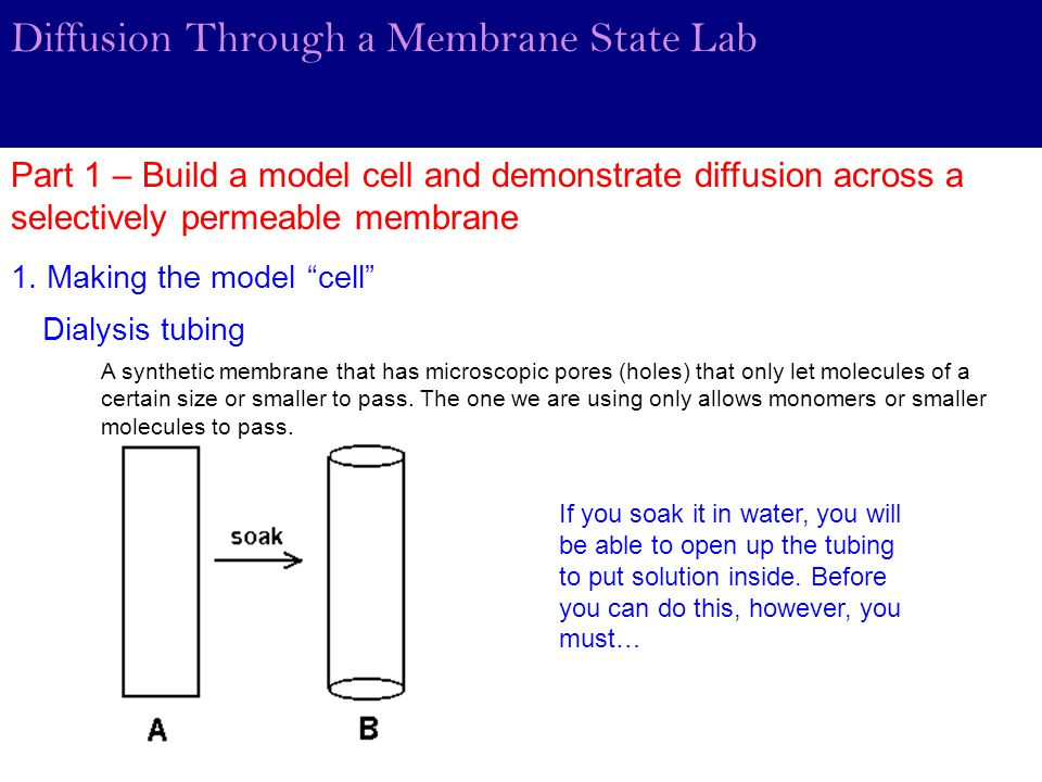 membrane lab report 1 osmosis egg lab report objective of the experiment the experiment is aimed at giving a better understanding of osmosis process and the different experiment conditions under which osmosis occurs.