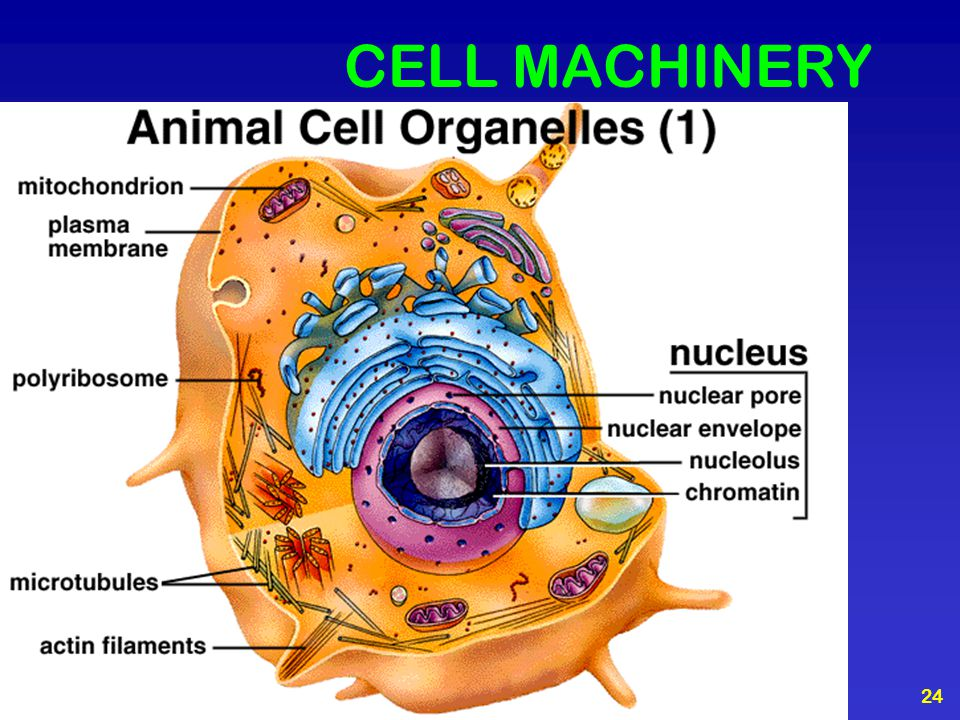 CELL MACHINERY
