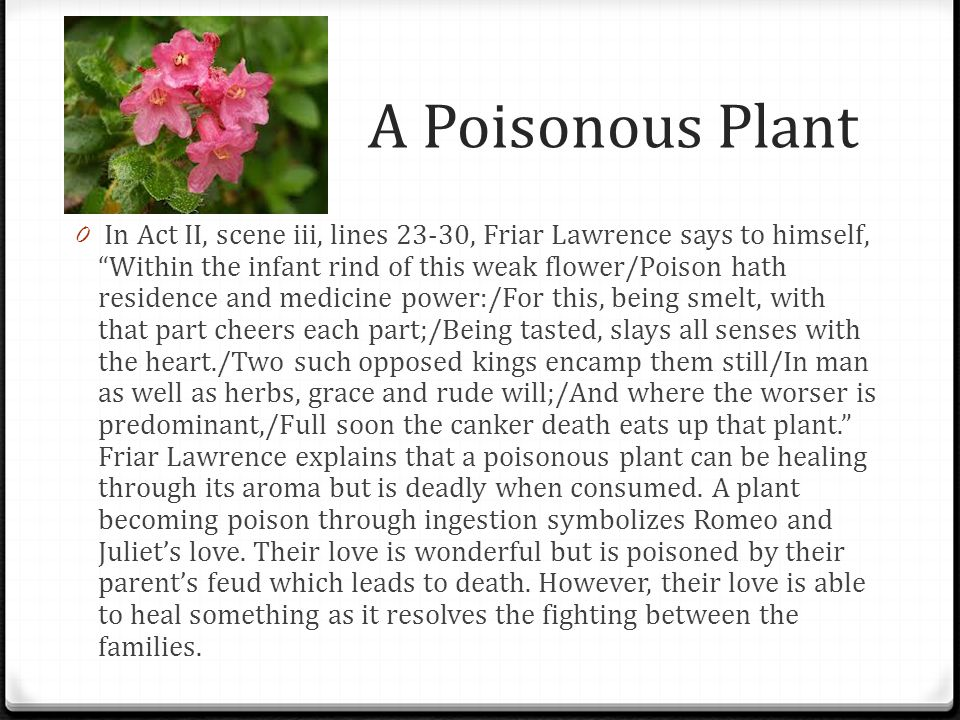 A Poisonous Plant