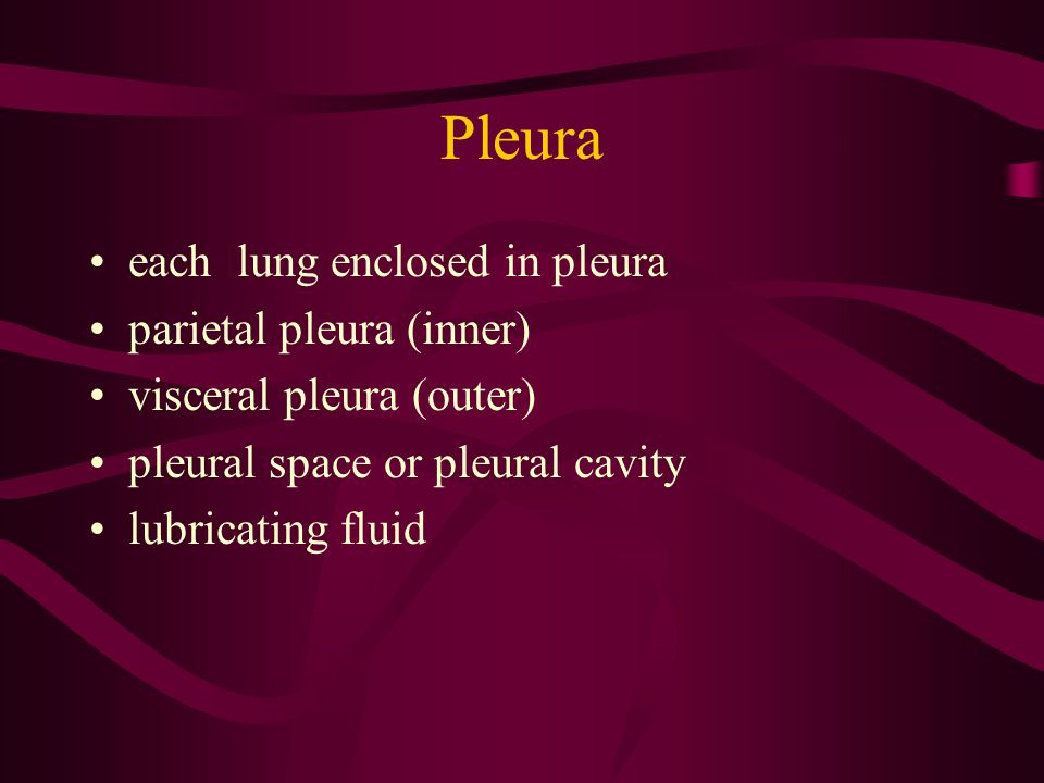Pleura each lung enclosed in pleura parietal pleura (inner)