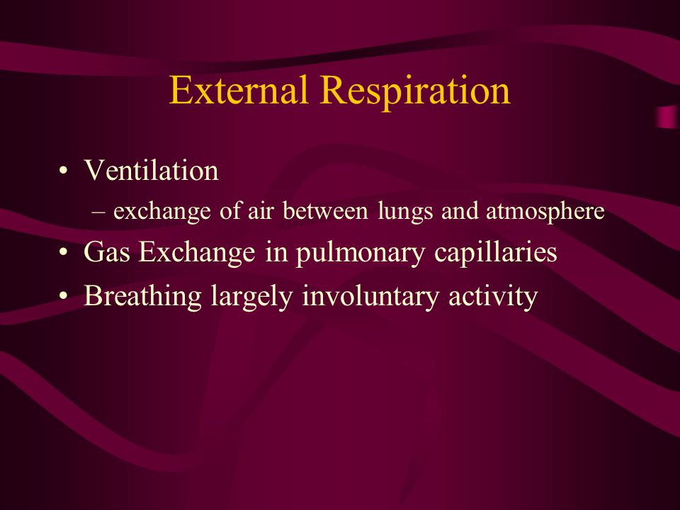 External Respiration Ventilation Gas Exchange in pulmonary capillaries