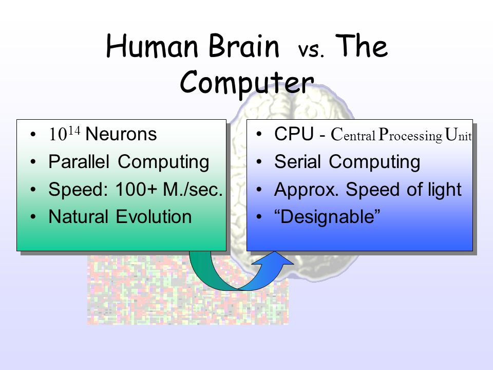 Human Brain vs. The Computer