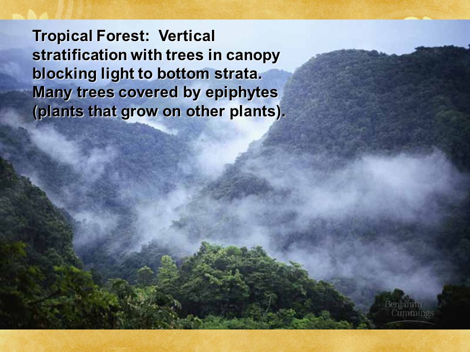 Tropical Forest: Vertical stratification with trees in canopy blocking light to bottom strata.