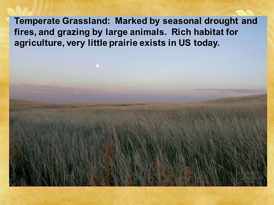 Temperate Grassland: Marked by seasonal drought and fires, and grazing by large animals.