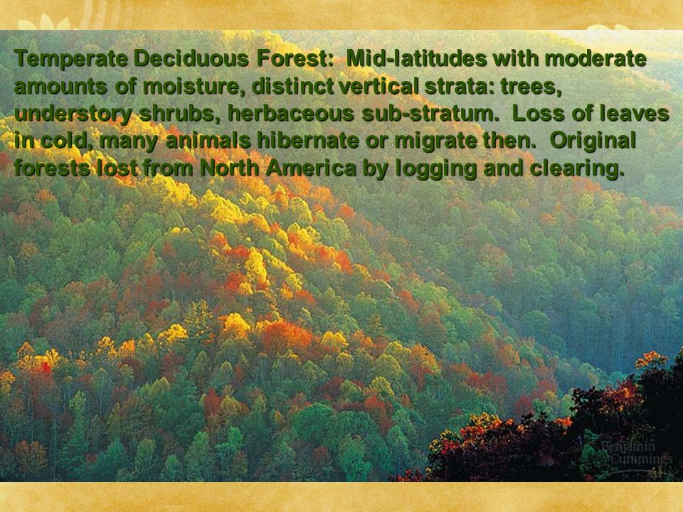 Temperate Deciduous Forest: Mid-latitudes with moderate amounts of moisture, distinct vertical strata: trees, understory shrubs, herbaceous sub-stratum.