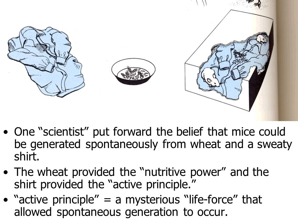 One scientist put forward the belief that mice could be generated spontaneously from wheat and a sweaty shirt.