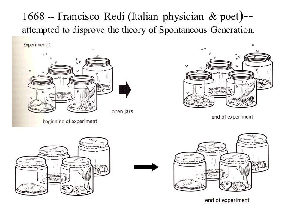 1668 -- Francisco Redi (Italian physician & poet)-- attempted to disprove the theory of Spontaneous Generation.