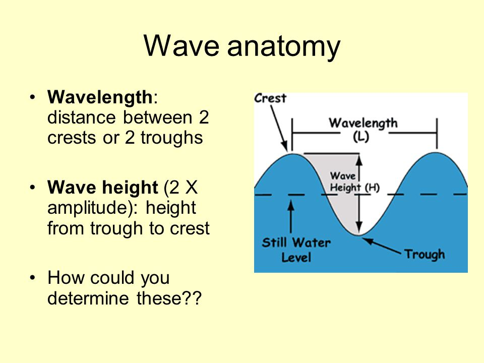 Wave anatomy Wavelength: distance between 2 crests or 2 troughs