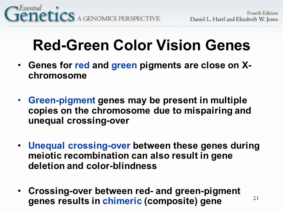 Red-Green Color Vision Genes