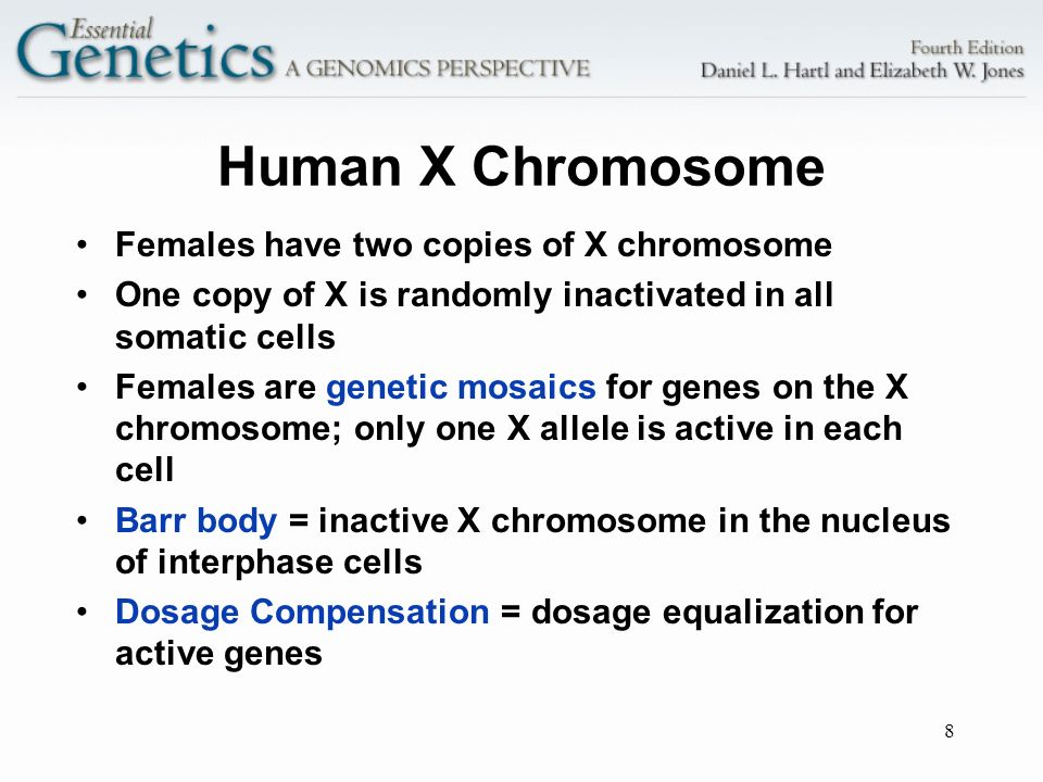 Human X Chromosome Females have two copies of X chromosome
