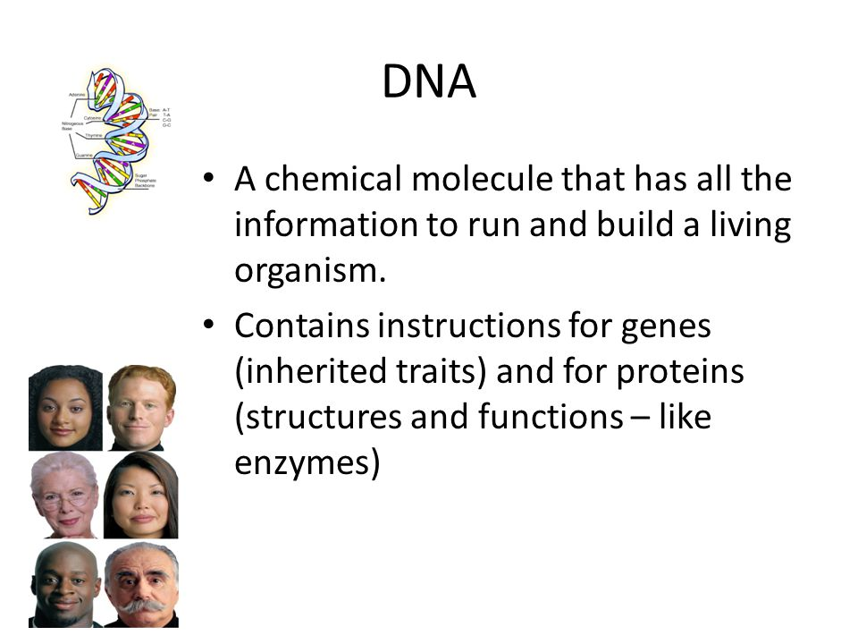 DNA A chemical molecule that has all the information to run and build a living organism.