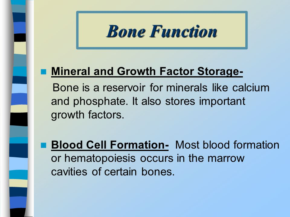 Bone Function Mineral and Growth Factor Storage-