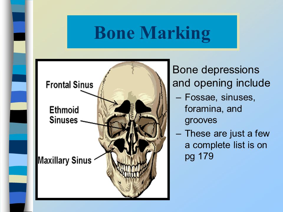 Bone Marking Bone depressions and opening include