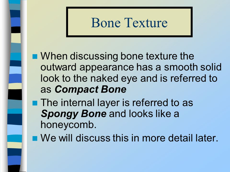 Bone Texture When discussing bone texture the outward appearance has a smooth solid look to the naked eye and is referred to as Compact Bone.