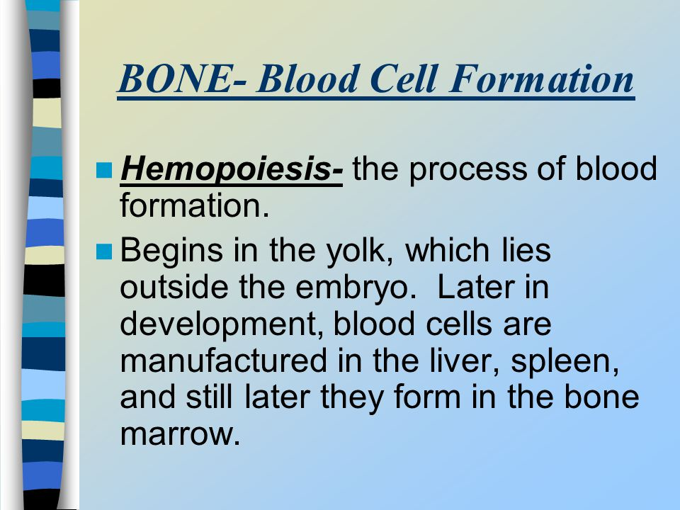 BONE- Blood Cell Formation