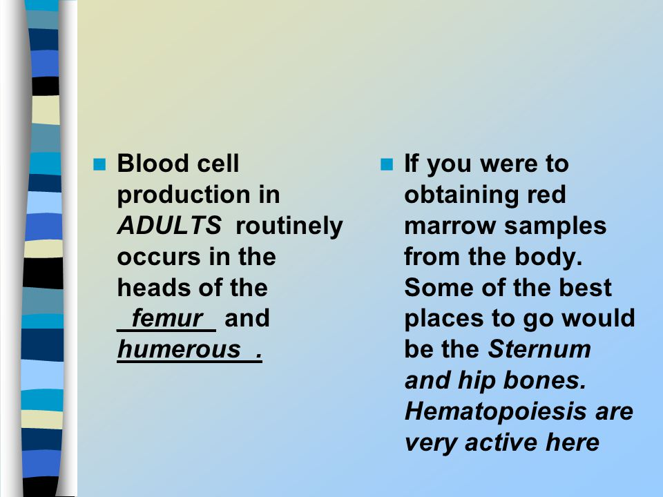 Blood cell production in ADULTS routinely occurs in the heads of the _femur_ and humerous_.