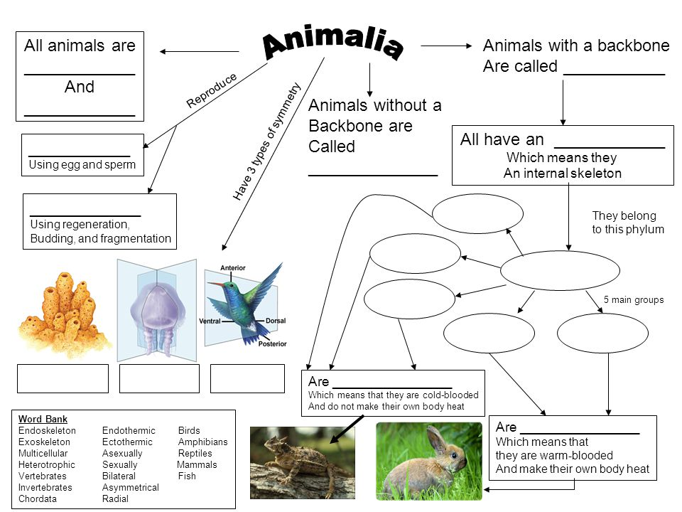 Animalia All animals are ____________ And ____________