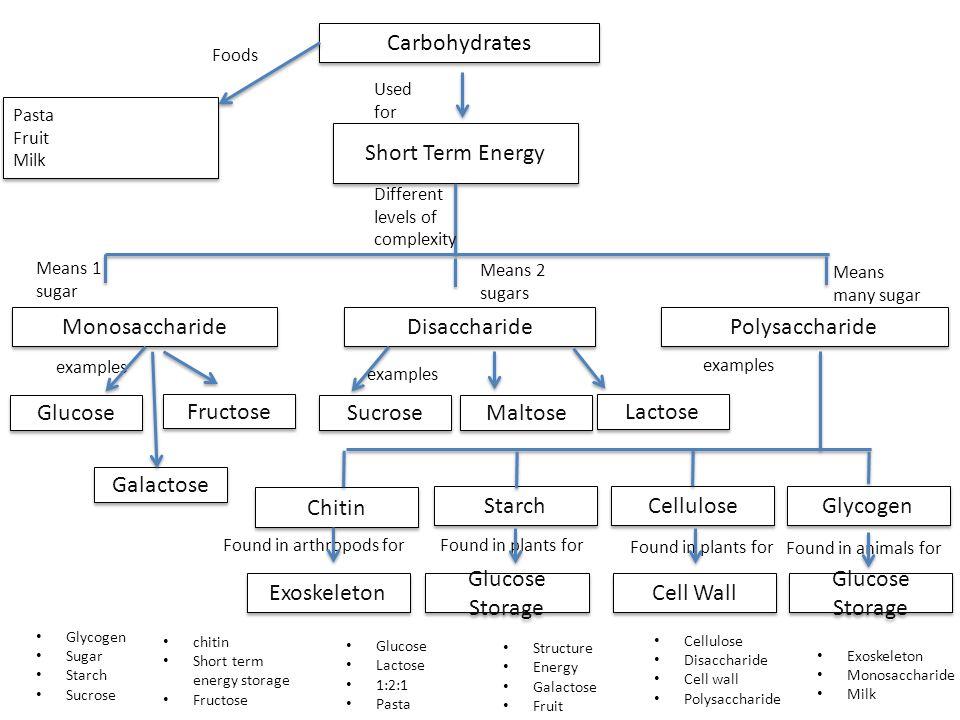 Carbohydrates: monosaccharides, disaccharides and polysaccharides.