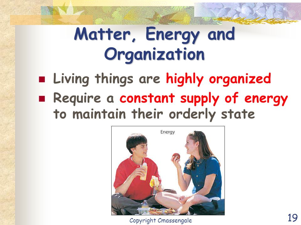 Matter, Energy and Organization