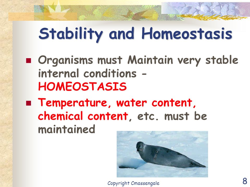 Stability and Homeostasis