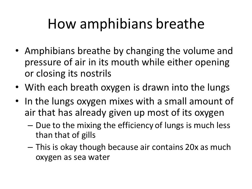 How amphibians breathe