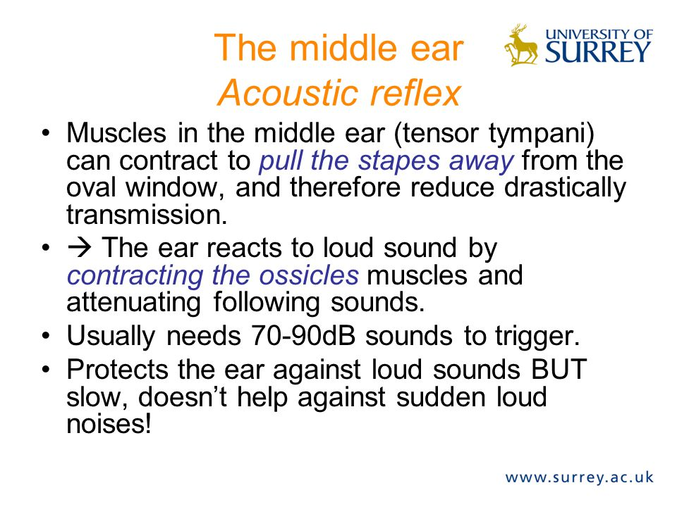 The middle ear Acoustic reflex