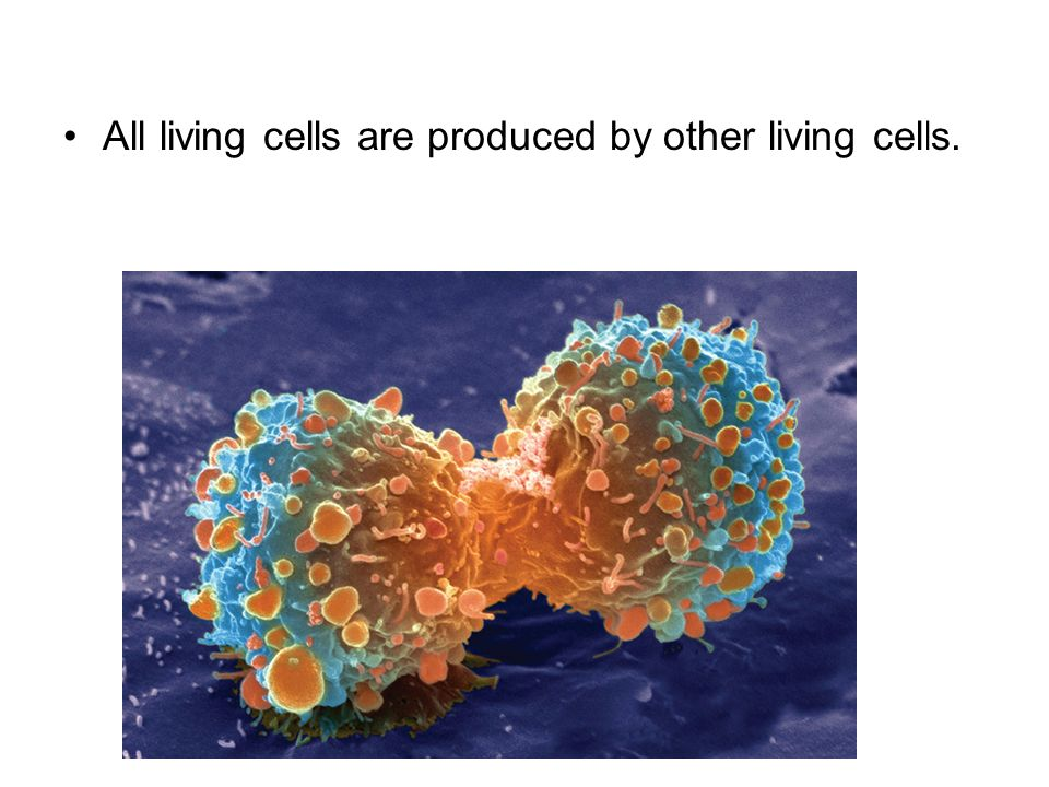 All living cells are produced by other living cells.