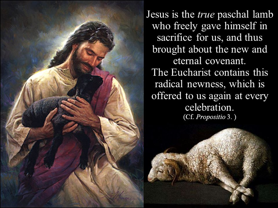 Jesus is the true paschal lamb who freely gave himself in sacrifice for us, and thus brought about the new and eternal covenant.