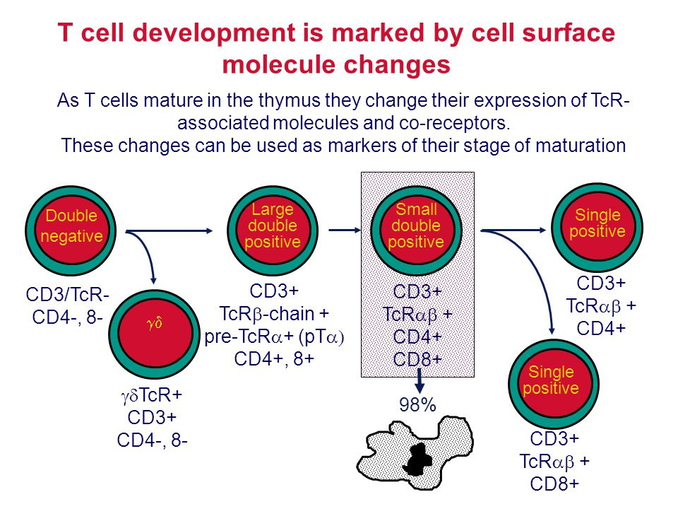 T cell development is marked by cell surface