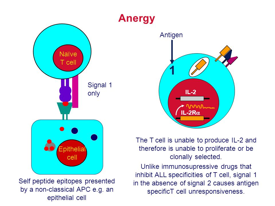 1 Anergy Antigen Naïve T cell Signal 1 only
