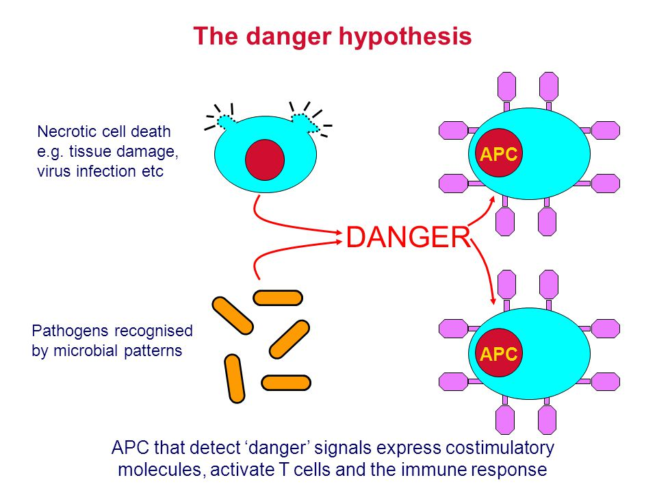 DANGER The danger hypothesis APC