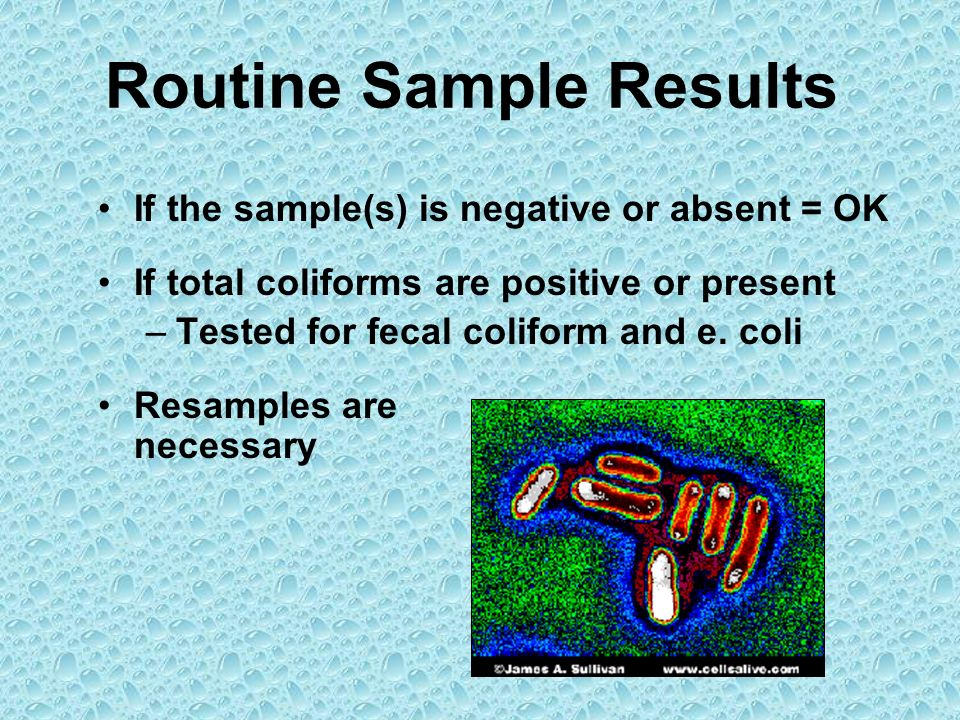 Routine Sample Results