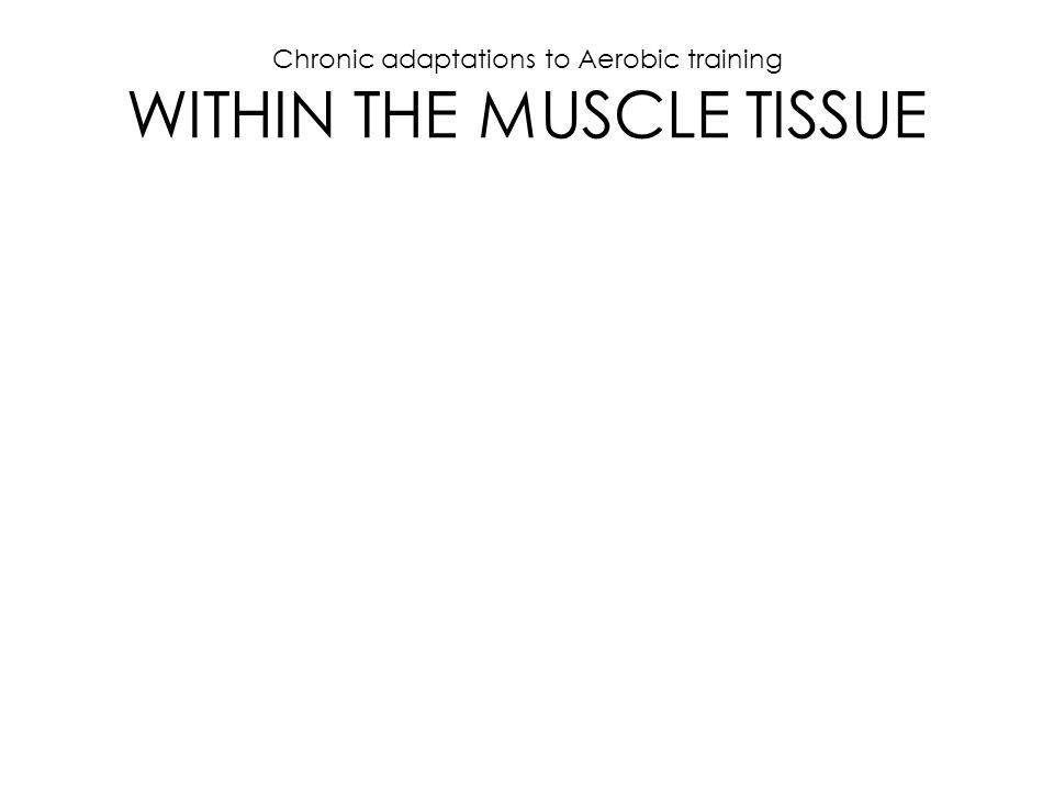 Chronic adaptations to Aerobic training WITHIN THE MUSCLE TISSUE