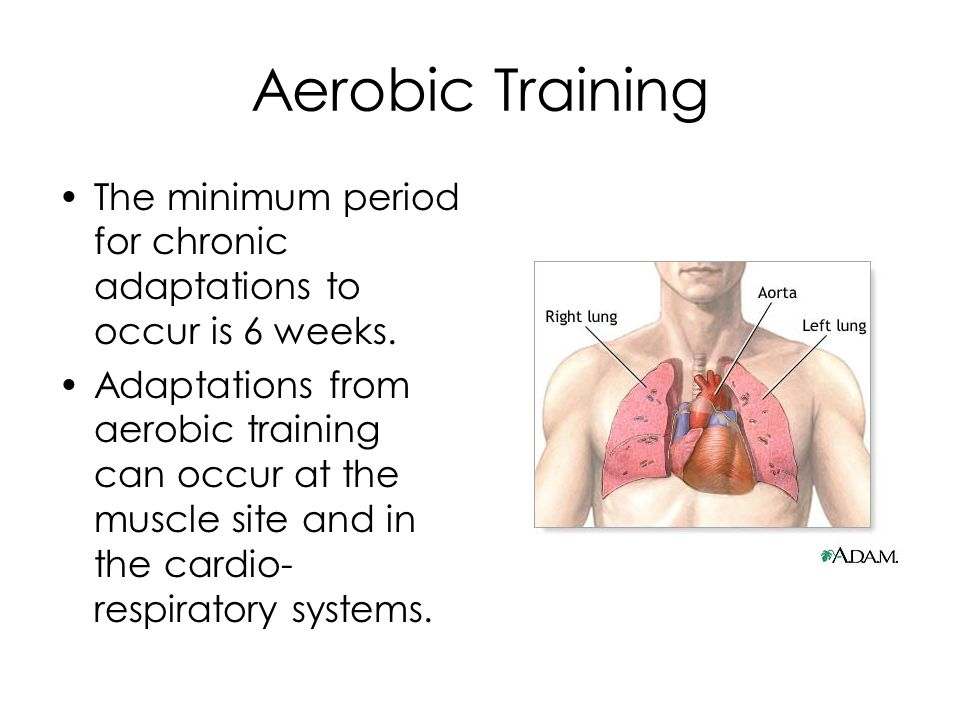 Aerobic Training The minimum period for chronic adaptations to occur is 6 weeks.
