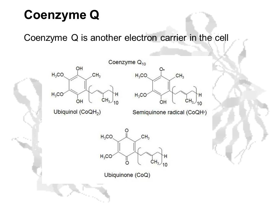 Coenzyme Q Coenzyme Q is another electron carrier in the cell