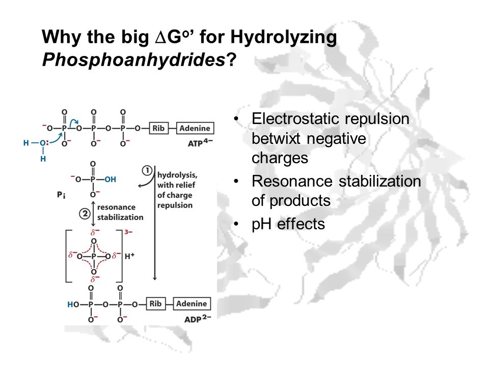 Why the big DGo' for Hydrolyzing Phosphoanhydrides