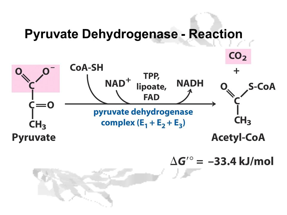 Pyruvate Dehydrogenase - Reaction